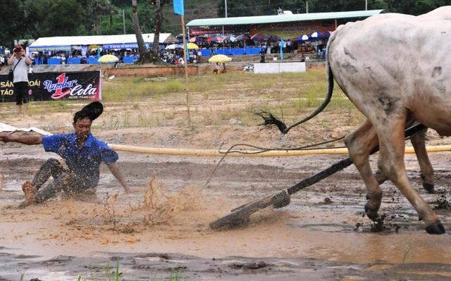 Độc đáo hội đua bò Bảy Núi thu hút hàng nghìn lượt du khách tới cổ vũ  - 9