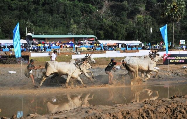 Độc đáo hội đua bò Bảy Núi thu hút hàng nghìn lượt du khách tới cổ vũ  - 7