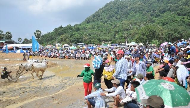 Độc đáo hội đua bò Bảy Núi thu hút hàng nghìn lượt du khách tới cổ vũ  - 12
