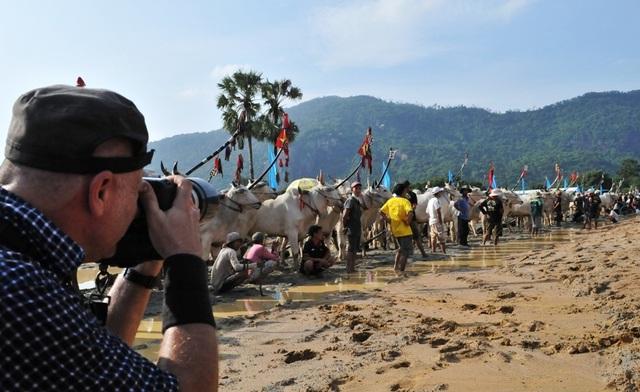 Độc đáo hội đua bò Bảy Núi thu hút hàng nghìn lượt du khách tới cổ vũ  - 3