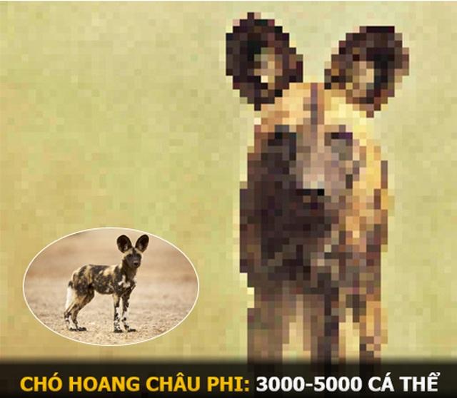"""""""Ám ảnh"""" album động vật hoang dã với mỗi Pixel tương ứng một cá thể còn sống - 11"""