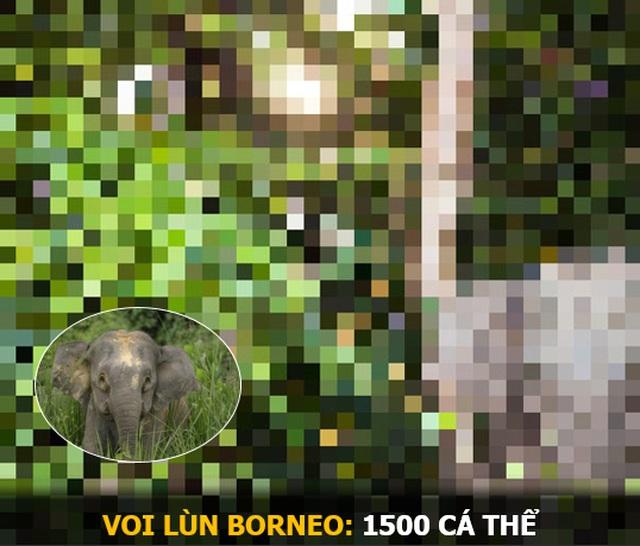 """""""Ám ảnh"""" album động vật hoang dã với mỗi Pixel tương ứng một cá thể còn sống - 8"""