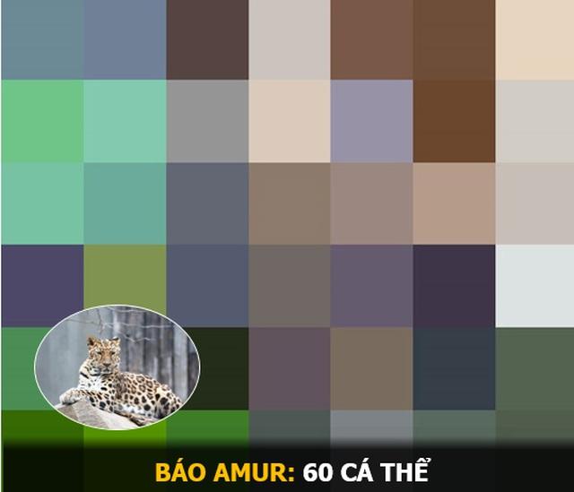"""""""Ám ảnh"""" album động vật hoang dã với mỗi Pixel tương ứng một cá thể còn sống - 14"""