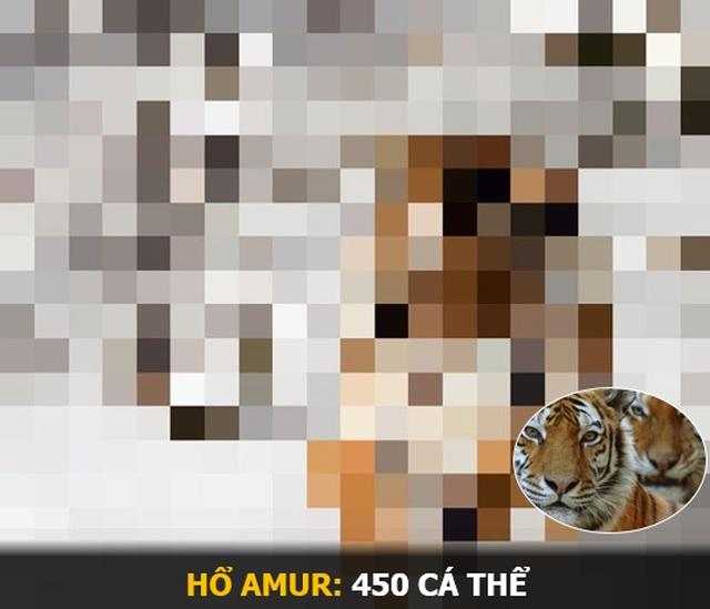"""""""Ám ảnh"""" album động vật hoang dã với mỗi Pixel tương ứng một cá thể còn sống - 13"""