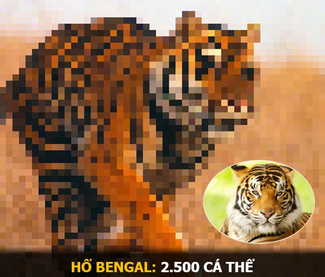 """""""Ám ảnh"""" album động vật hoang dã với mỗi Pixel tương ứng một cá thể còn sống - 6"""