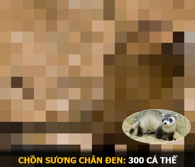 """""""Ám ảnh"""" album động vật hoang dã với mỗi Pixel tương ứng một cá thể còn sống - 12"""
