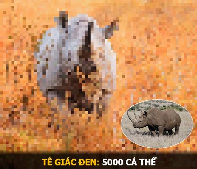 """""""Ám ảnh"""" album động vật hoang dã với mỗi Pixel tương ứng một cá thể còn sống - 2"""