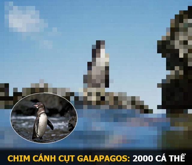 """""""Ám ảnh"""" album động vật hoang dã với mỗi Pixel tương ứng một cá thể còn sống - 15"""