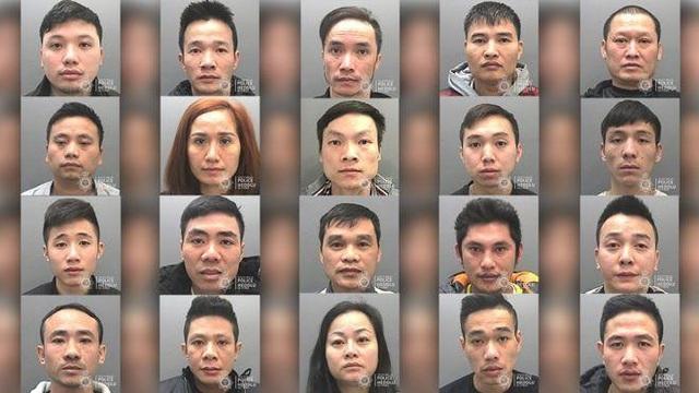 Anh tuyên án nhóm người Việt trồng cần sa quy mô lớn - 1
