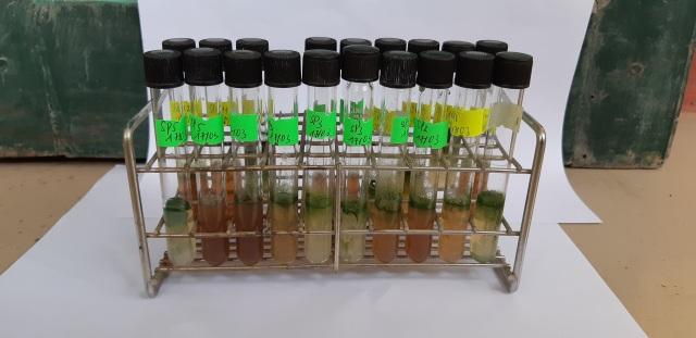 """Vi tảo """"Made in Vietnam"""": Mục sở thị công nghệ nuôi tảo Spirulina của các nhà khoa học Việt - 5"""