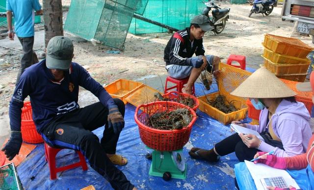"""Phú Yên: Thị trường Trung Quốc """"chê"""" tôm hùm, người nuôi lao đao - 6"""