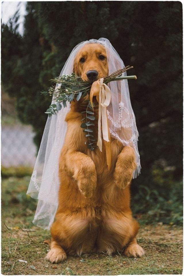 Khi gia đình giục cưới, 9X Sóc Trăng tung bộ ảnh với cún cưng thay câu trả lời - 6
