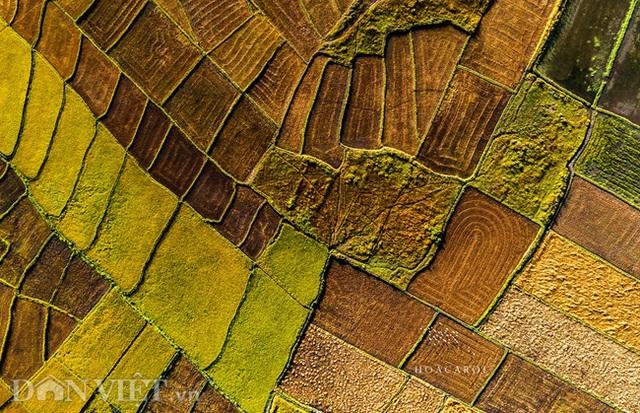 Chiêm ngưỡng cánh đồng lúa đẹp nhất nhì Tây Nguyên từ trên cao - 7