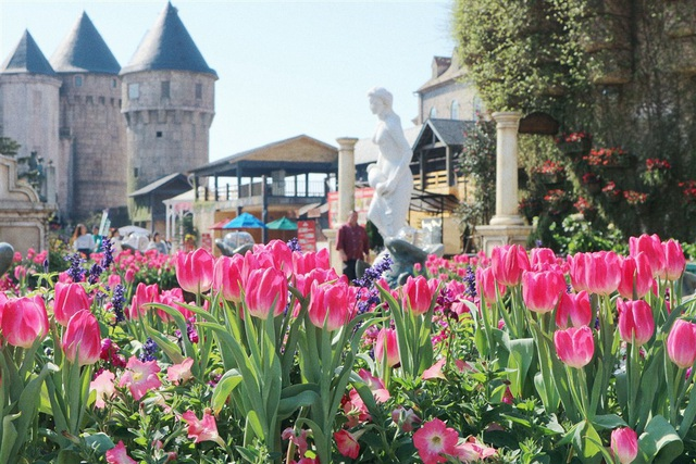 Một triệu bông tulip khoe sắc trên đỉnh Bà Nà - Ảnh 2.