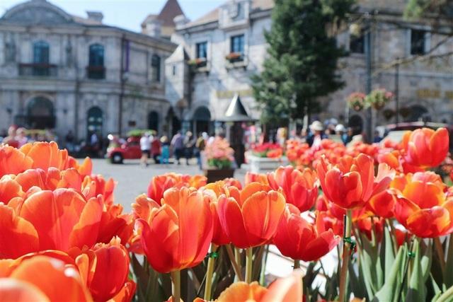 Một triệu bông tulip khoe sắc trên đỉnh Bà Nà - Ảnh 5.
