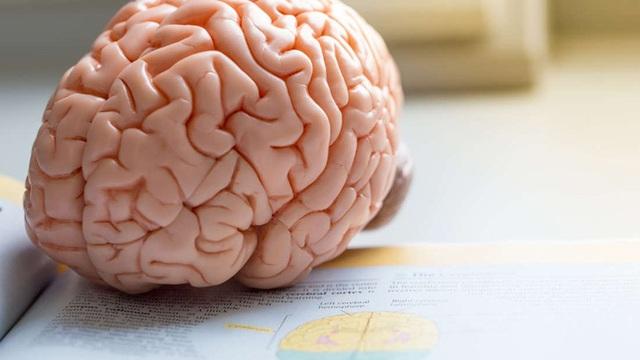 Những người có nhiều mỡ thừa ở bụng có bộ não nhỏ? - Ảnh 1.