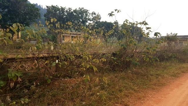 Chuyện tình nhói lòng ở trại phong bỏ hoang Hà Nội - Ảnh 1.