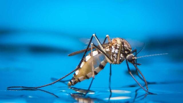 Tìm ra phương pháp mới làm giảm sinh sản của muỗi - Ảnh 1.
