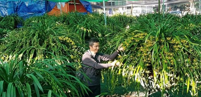 Đại gia Hà thành chi 1,5 tỷ đồng mua 500 nhành lan huyền thoại chơi Tết - Ảnh 1.