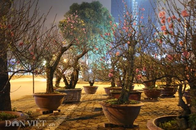Trùm chăn thâu đêm trông đào, quất lộ thiên ở Hà Nội - Ảnh 11.
