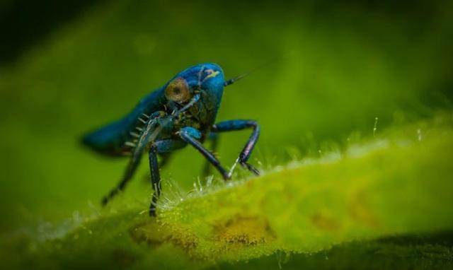 Mỹ đang phát triển công nghệ AI mới nhờ… côn trùng - Ảnh 1.