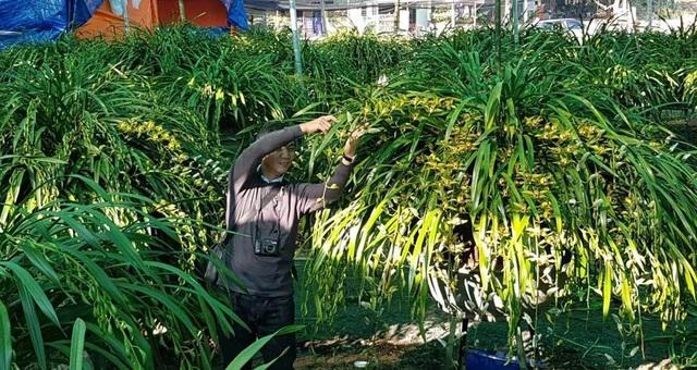 Khu vườn huyền thoại ở Lào Cai, mỗi năm chỉ thu 1 lần 20 tỷ đồng - Ảnh 5.