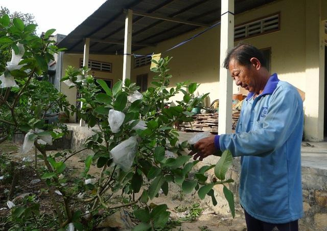 Ông Huỳnh Văn Quốc cũng như nhiều người dân Ba Chúc gác lại đau thương, tập trung lao động sản xuất lo cho cuộc sống mới