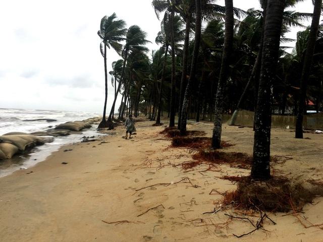 Hàng dừa ven biển bị sóng đánh trơ gốc