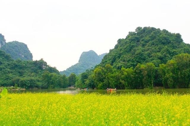 Một vườn hoa cải vàng rộng nghìn mét vuông được trồng ngay bên sông - đường vào vườn chim Thung Nham nổi tiếng ở Ninh Bình đã thu hút du khách đến chiêm ngưỡng những ngày qua.