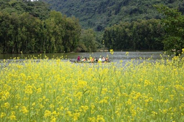 Hoa cải vàng được gieo phủ kín bờ sông, trải dài hàng trăm mét. Từ dưới sông du khách có thể ngắm nhìn cả một vùng phủ kín màu vàng rực của sắc hoa cải vàng đang bung nở.