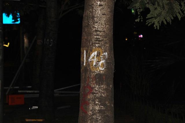 Các cây chuẩn bị đánh chuyển đều được đánh số. Việc dịch chuyển và chặt hạ gần 500 cây xanh sẽ được thực hiện từ đêm 2/1 và ngay sau đó nhà thầu sẽ thi công xén vỉa hè. Trong số 476 cây xanh thuộc khuôn khổ dự án, Hà Nội sẽ đánh chuyển 371 cây, chặt hạ 105 cây.
