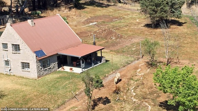 Nhà nghỉ nằm trơ trọi giữa khu đất trống với bầy sư tử hàng chục con liên tục đi dạo xung quanh