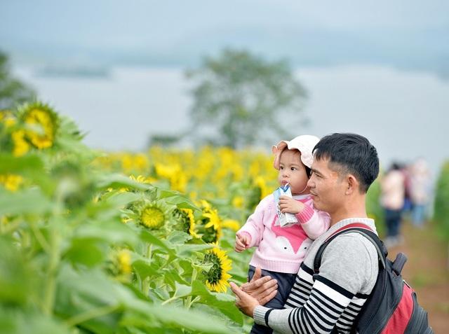 Mãn nhãn ngắm cánh đồng triệu bông hoa hướng dương bung nở ở Nghệ An - 4