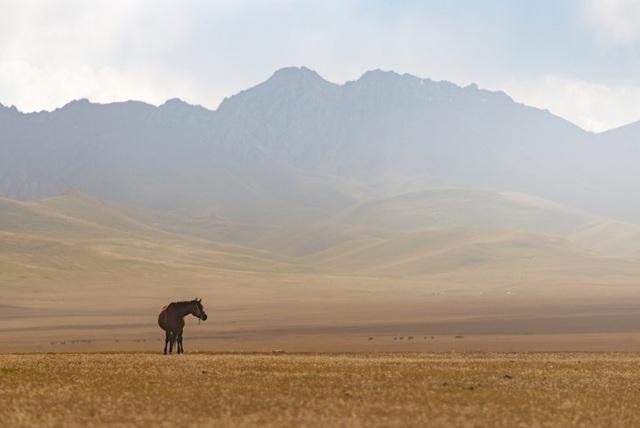 Một con ngựa trên thảo nguyên rộng lớn vùng Song-Kul.