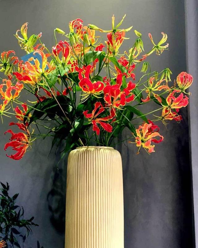 Loài hoa đỏ rực lửa từ Nhật đốt túi tiền khách dịp Tết - Ảnh 4.