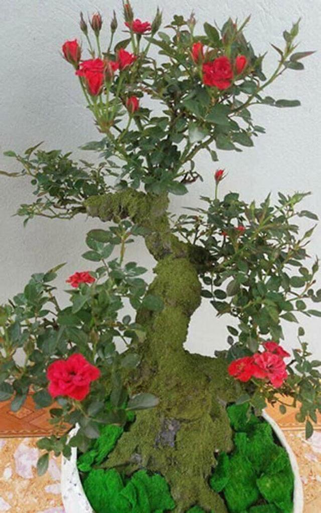 Những gốc hoa hồng cổ siêu đắt đỏ của đại gia Việt - Ảnh 8.