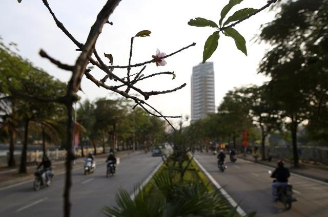 Con đường hoa đào nở đỏ rực ở Hà Nội báo hiệu Tết đã cận kề - Ảnh 13.