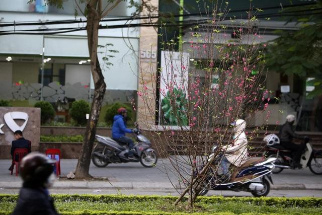 Con đường hoa đào nở đỏ rực ở Hà Nội báo hiệu Tết đã cận kề - Ảnh 14.