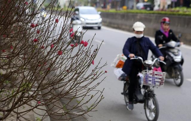 Con đường hoa đào nở đỏ rực ở Hà Nội báo hiệu Tết đã cận kề - Ảnh 15.