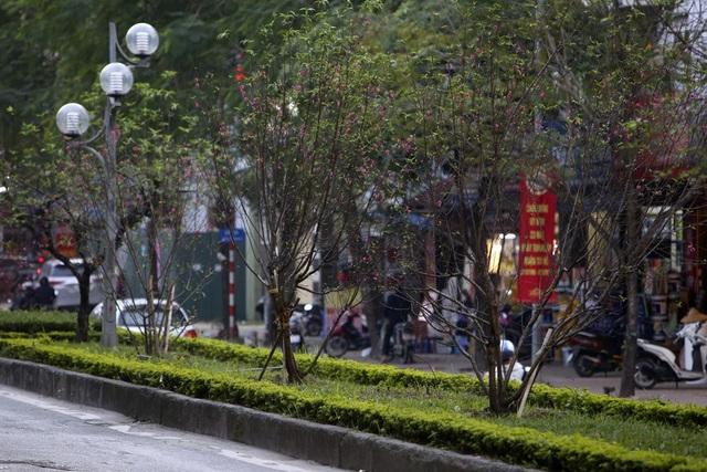 Con đường hoa đào nở đỏ rực ở Hà Nội báo hiệu Tết đã cận kề - Ảnh 4.