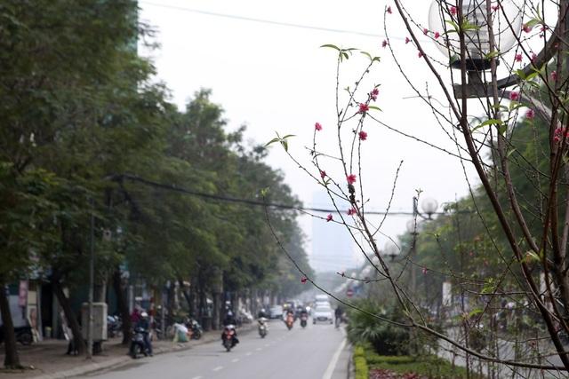 Con đường hoa đào nở đỏ rực ở Hà Nội báo hiệu Tết đã cận kề - Ảnh 5.