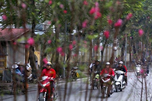 Con đường hoa đào nở đỏ rực ở Hà Nội báo hiệu Tết đã cận kề - Ảnh 6.