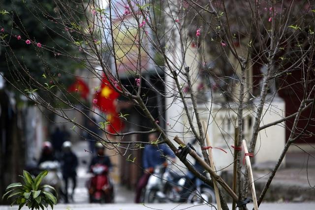 Con đường hoa đào nở đỏ rực ở Hà Nội báo hiệu Tết đã cận kề - Ảnh 7.