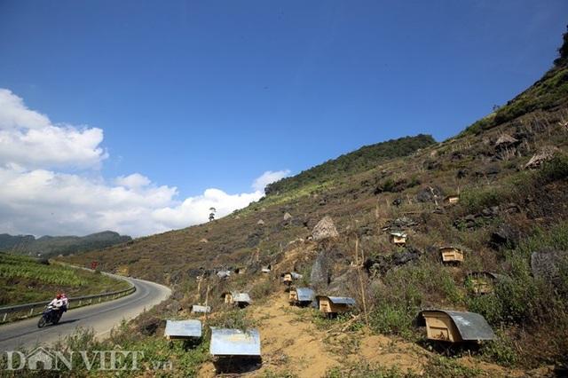 Nghề lạ ở Hà Giang: Nuôi ong trên đá - 1