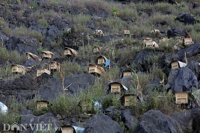 Nghề lạ ở Hà Giang: Nuôi ong trên đá - 2