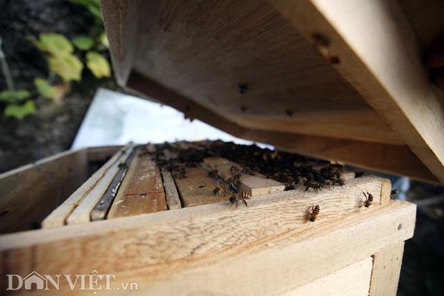 Nghề lạ ở Hà Giang: Nuôi ong trên đá - 15