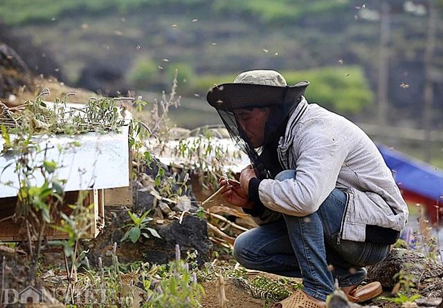 Nghề lạ ở Hà Giang: Nuôi ong trên đá - 3
