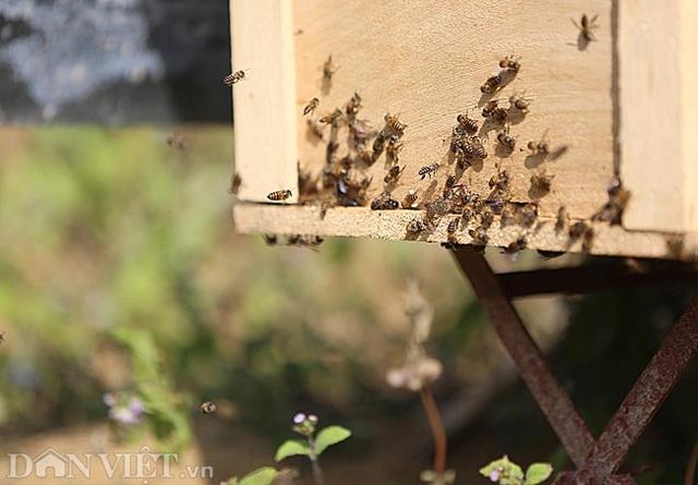 Nghề lạ ở Hà Giang: Nuôi ong trên đá - 6