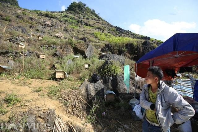 Nghề lạ ở Hà Giang: Nuôi ong trên đá - 7
