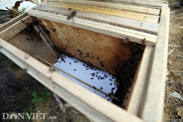Nghề lạ ở Hà Giang: Nuôi ong trên đá - 8
